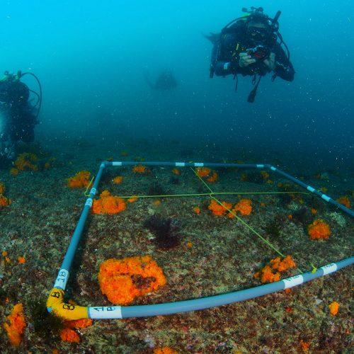 Proyecto Mar de Gades