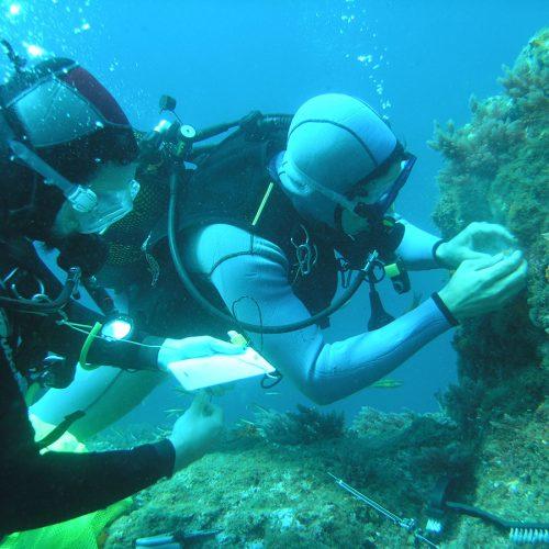 Corales del Mediterráneo
