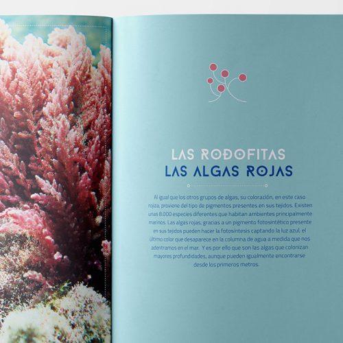 Guía de buceo sostenible del litoral occidental de Granada